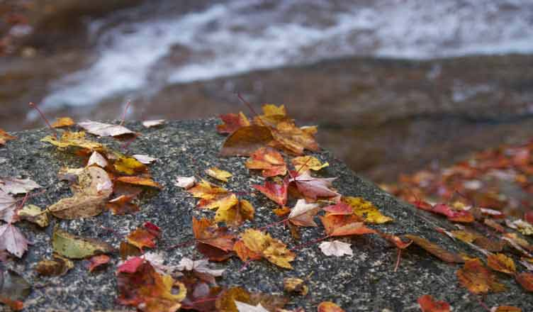 images-leaves-fall-autumn-9